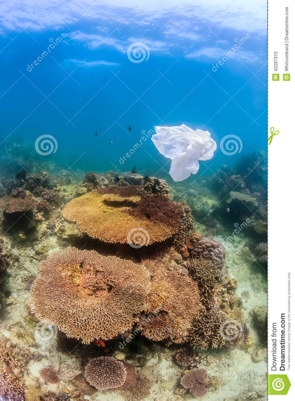 Dumped plastic bag floating next to a coral reef