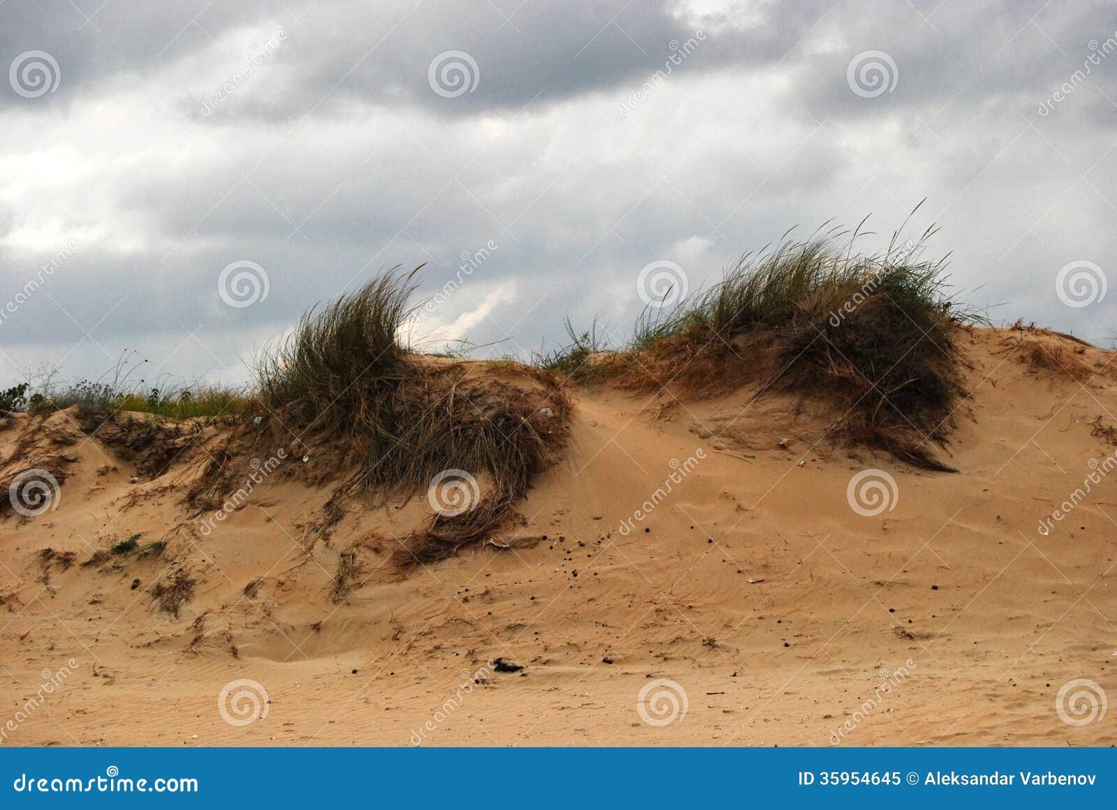 Duna del arena de mar