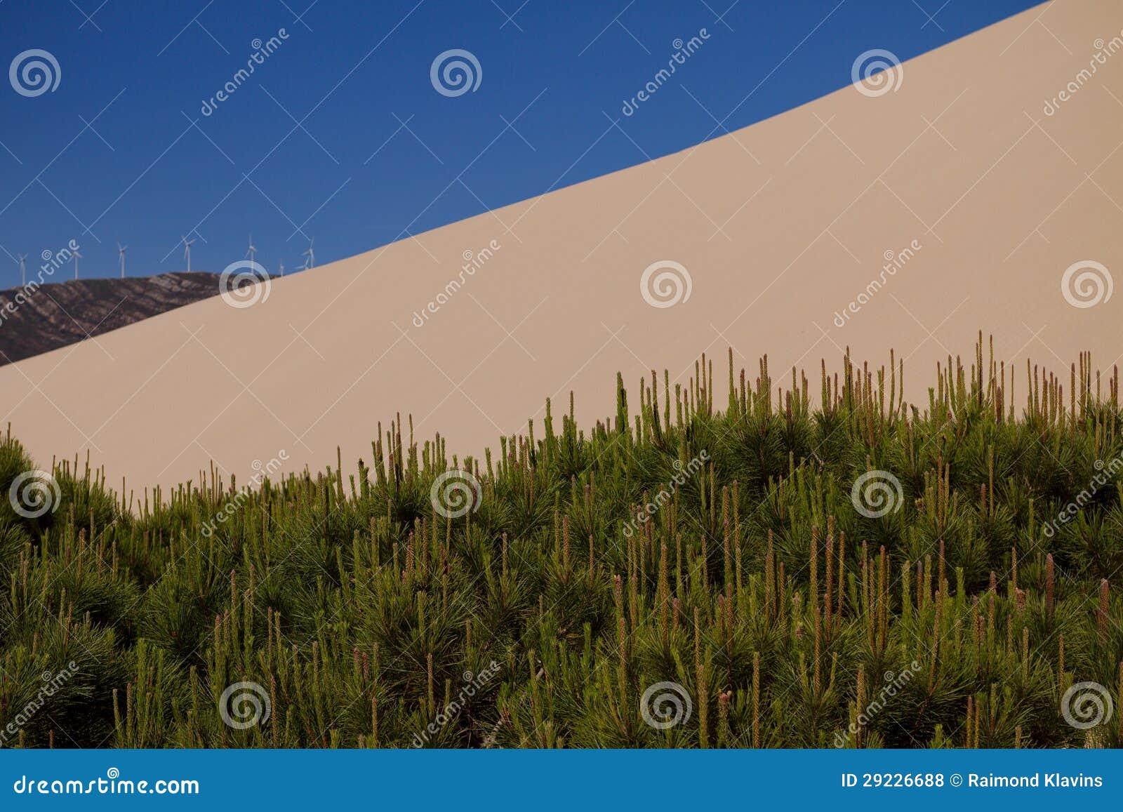 Download Duna e árvores de areia foto de stock. Imagem de ensolarado - 29226688