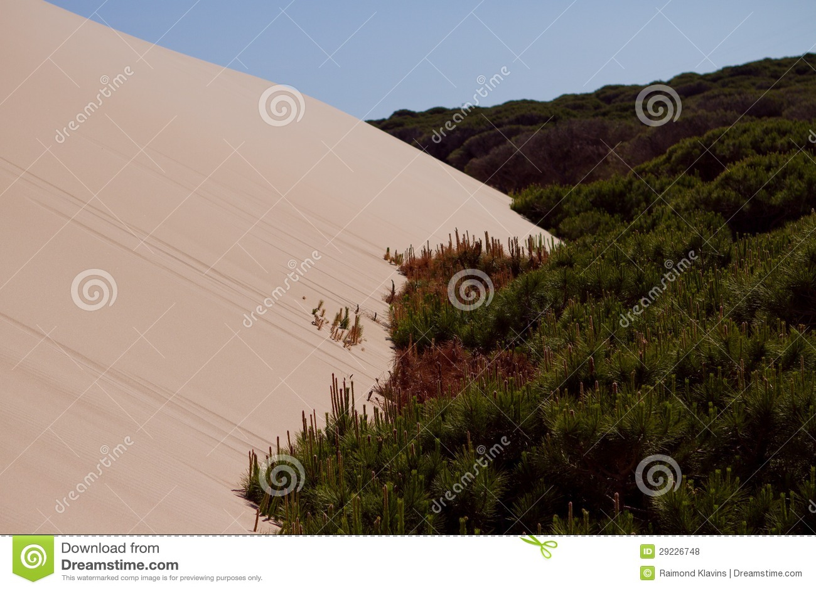 Download Duna e árvores de areia foto de stock. Imagem de nave - 29226748
