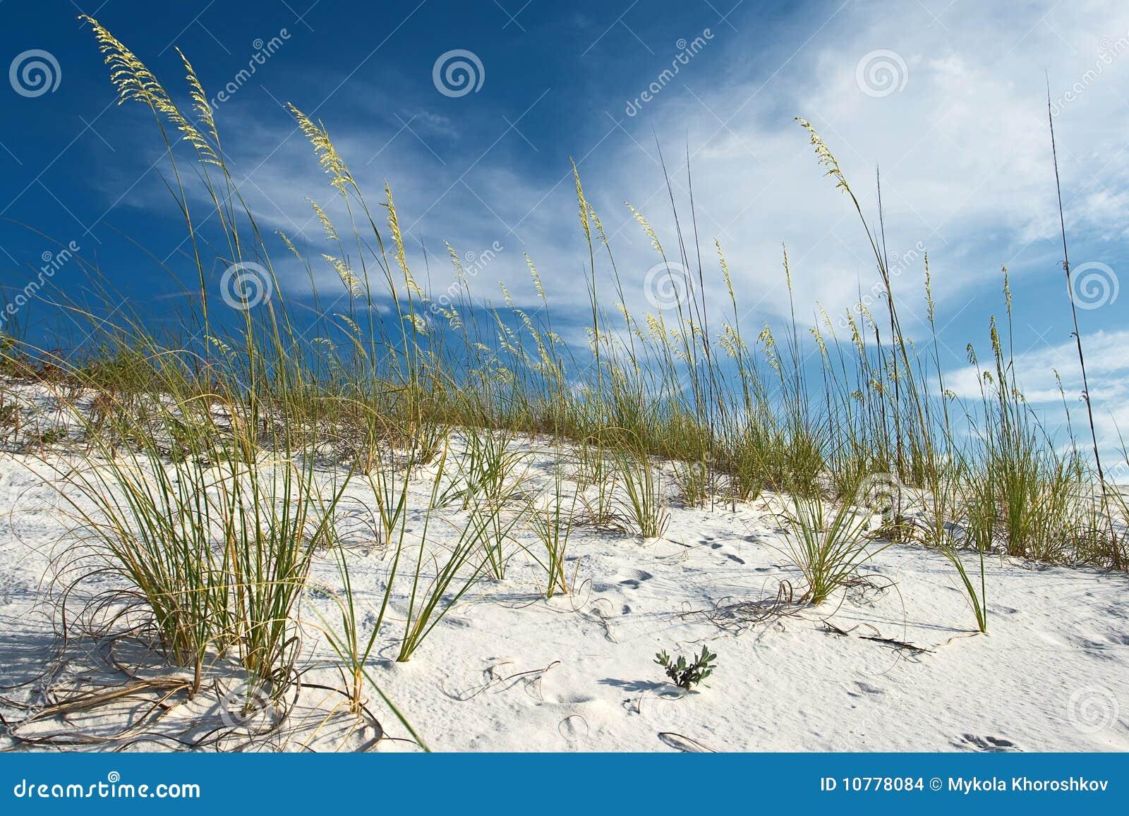 Duna e hierbas de arena bajo el cielo bastante azul
