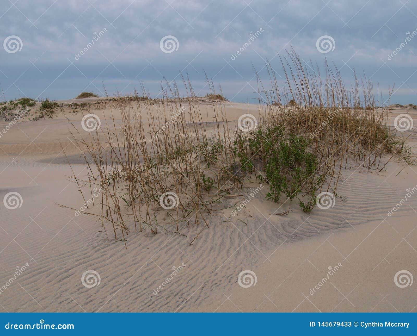 Dunas Carolina Outer Banks norte da ilha de Hatteras