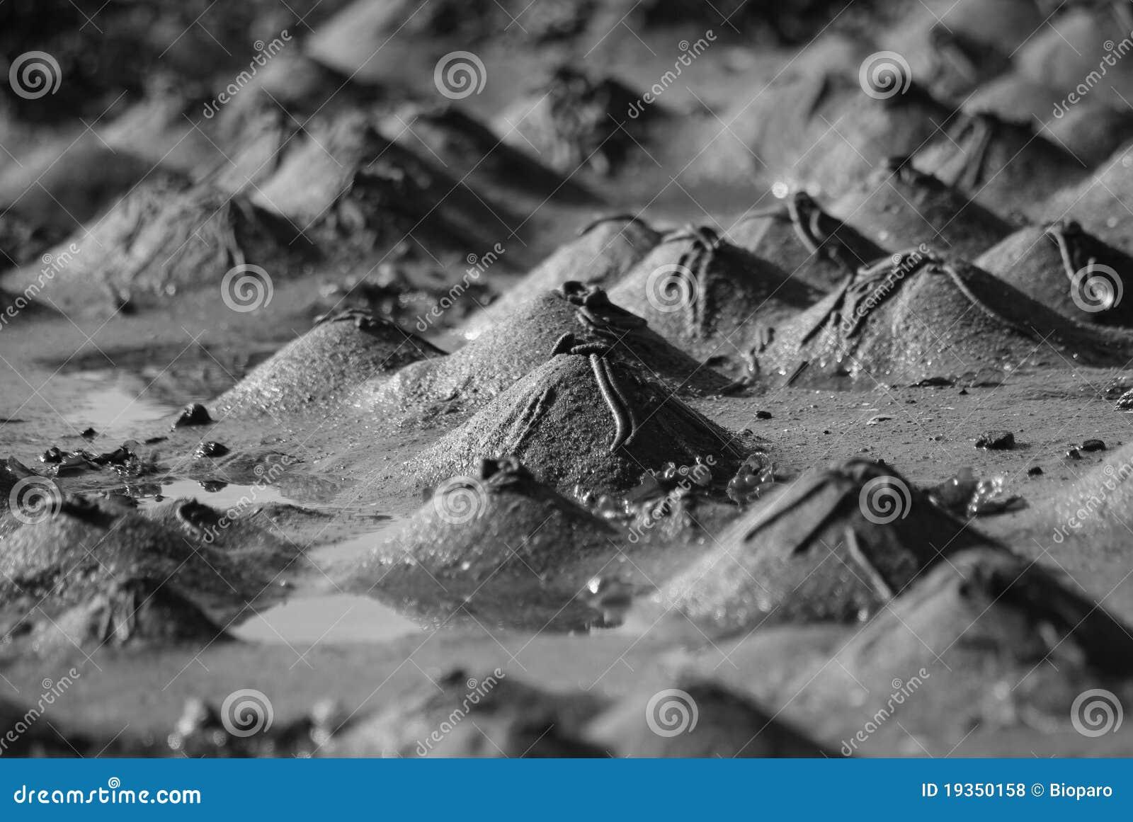 Dunas de areia