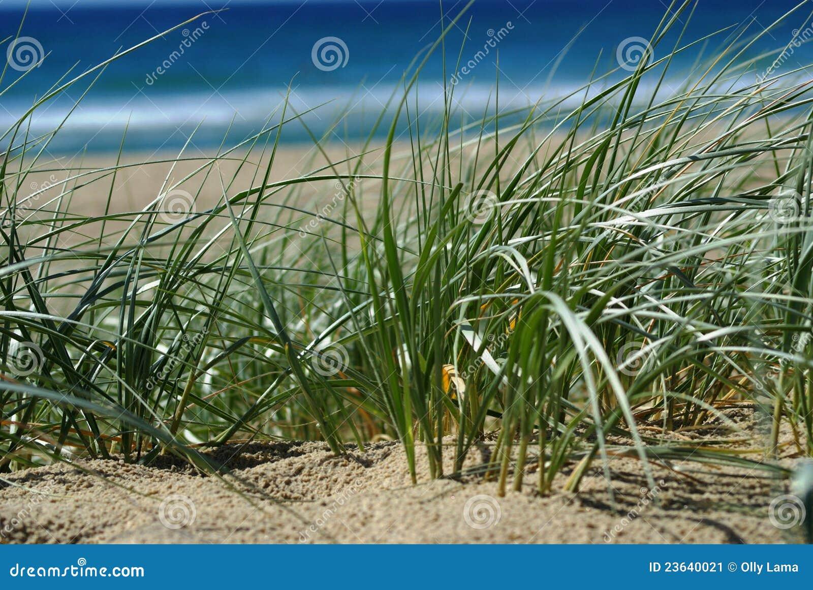 Dunas de arena de la playa imagen de archivo imagen de for Arena de playa precio