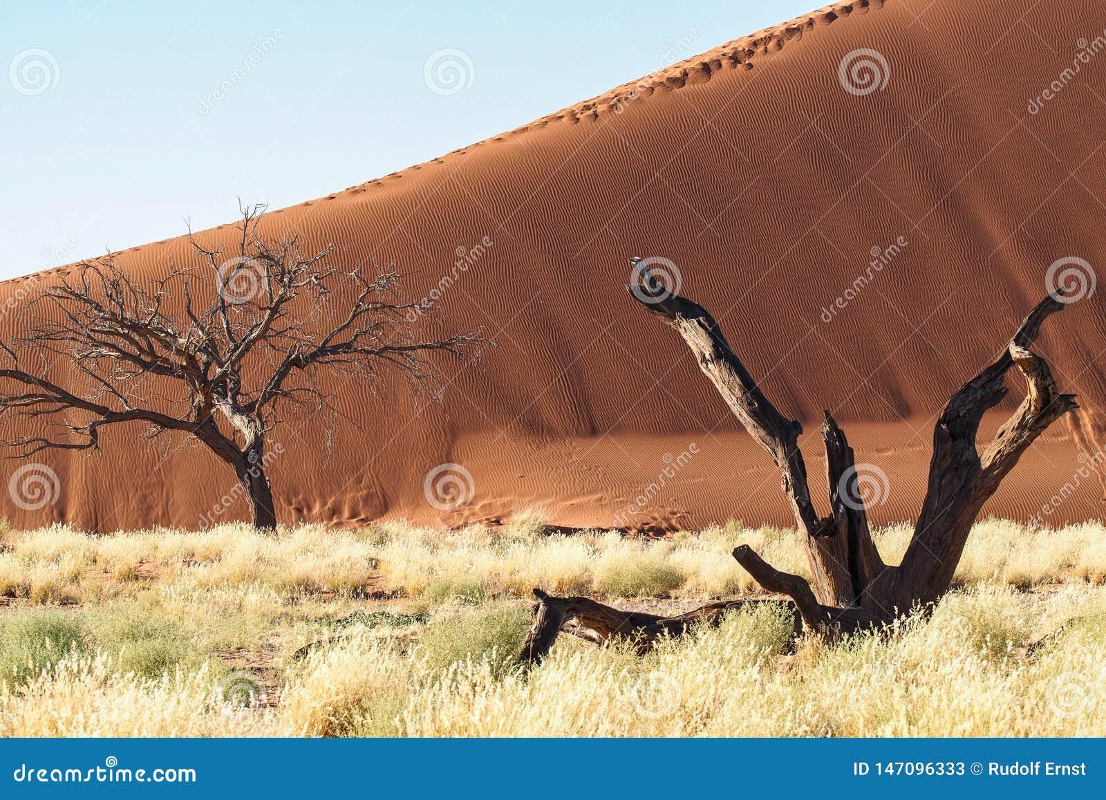 Dunas de arena en la cacerola de Sossusvlei en Namibia ?frica