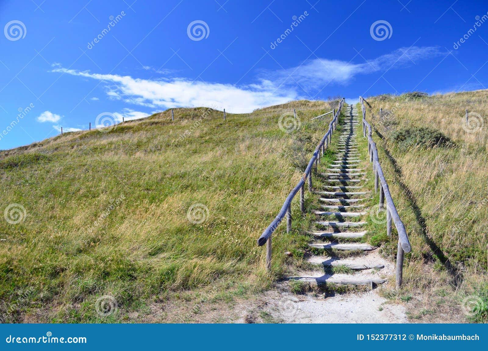 Dunas de condução da escadaria de madeira cobertas na grama na paisagem protegida, conduzindo para encalhar na ilha Texel nos Paí
