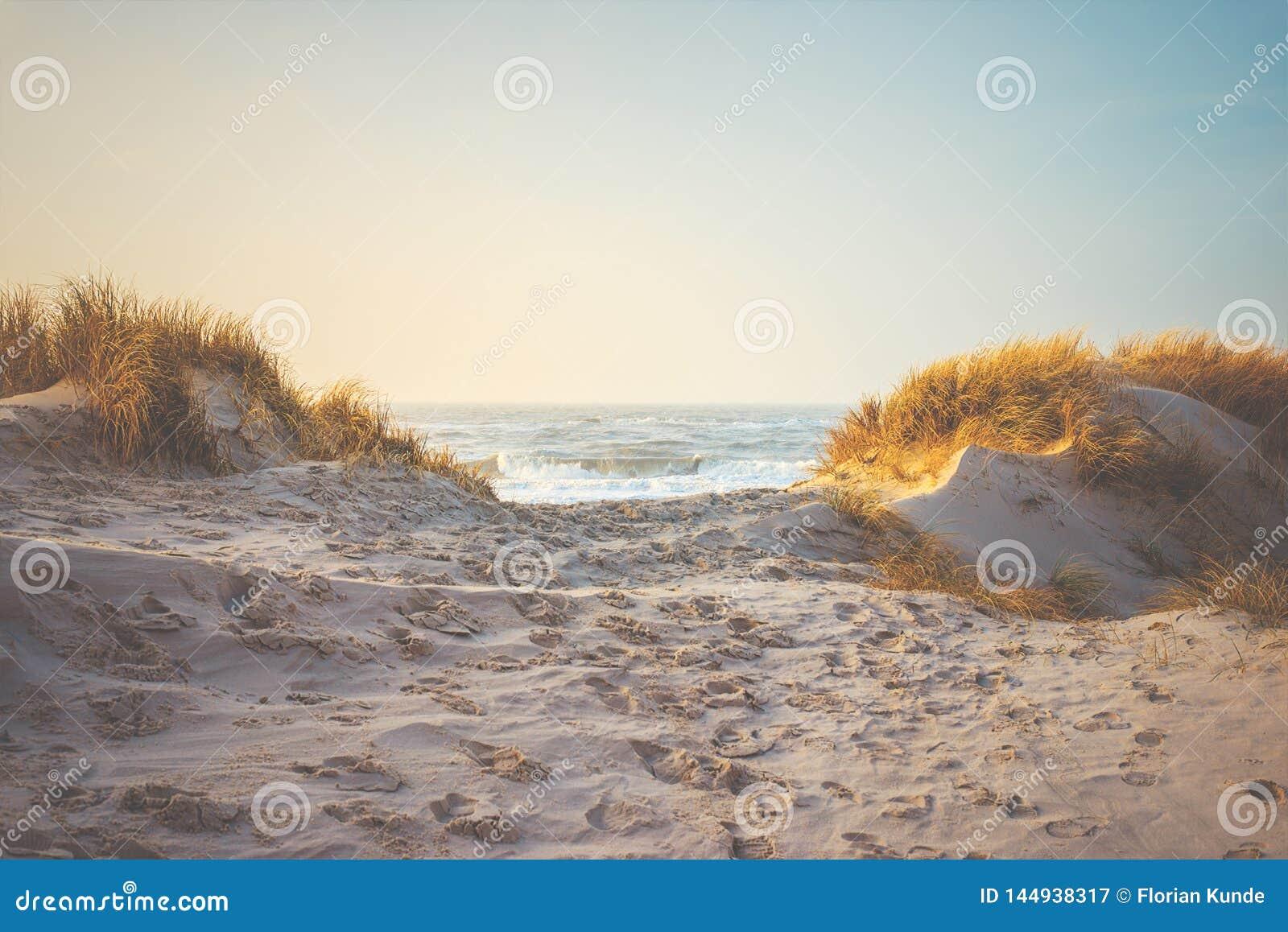 Dunas e hierba en la playa en la costa de Dinamarca