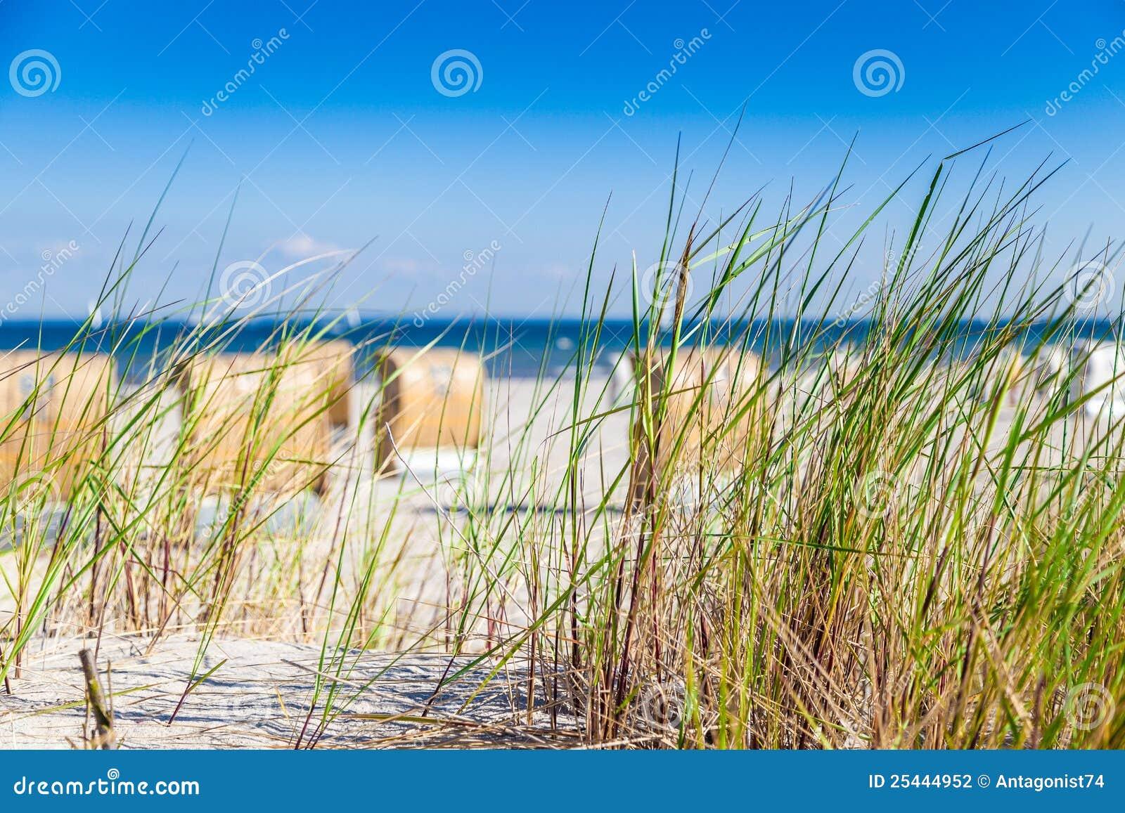 Dune avec le roseau