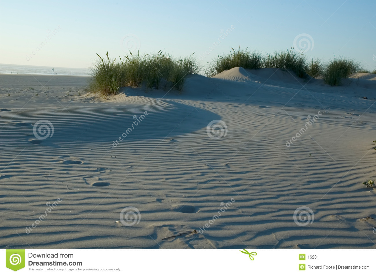 Dune de sable herbeuse