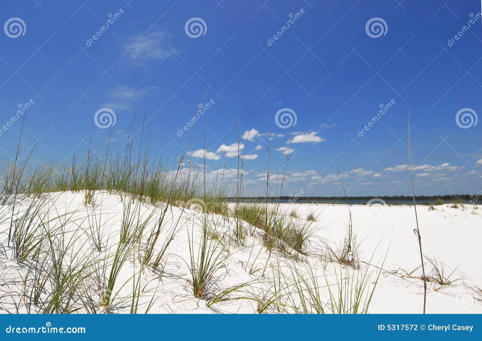 Download Dune Di Sabbia Alla Spiaggia Fotografia Stock - Immagine di bello, cielo: 5317572