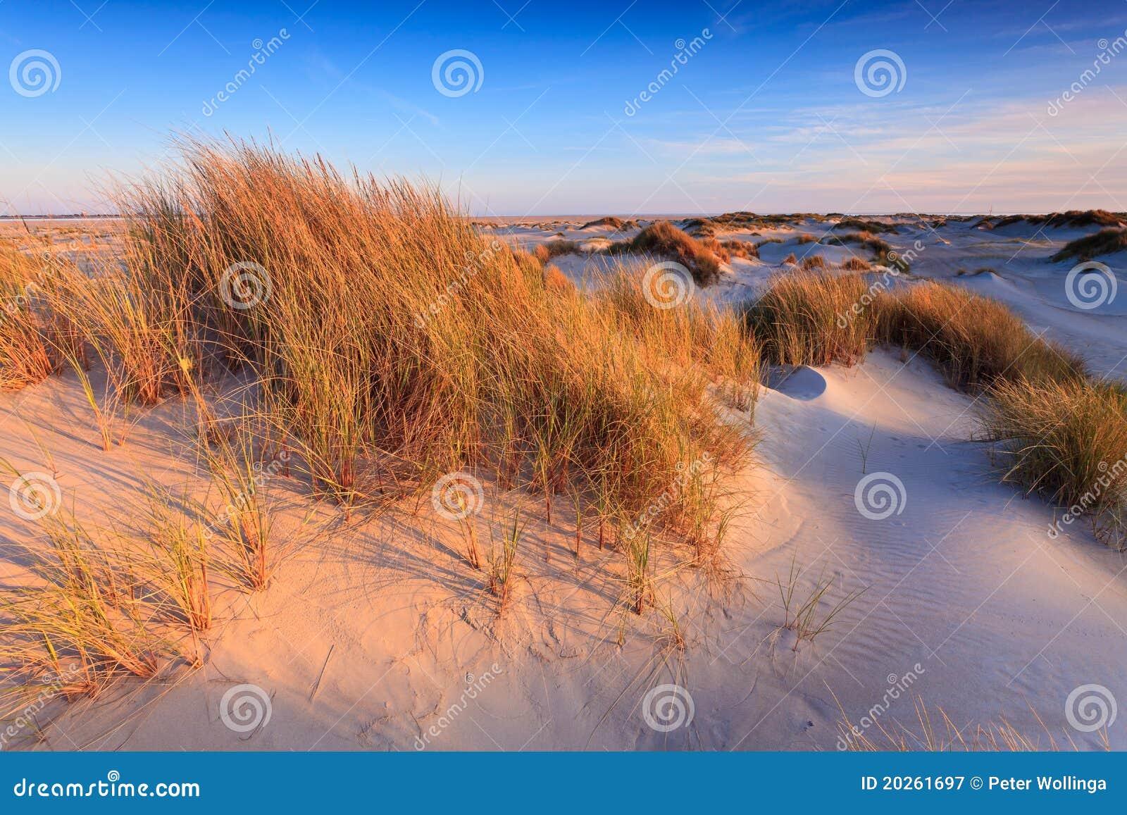 Dune di sabbia con l erba del casco