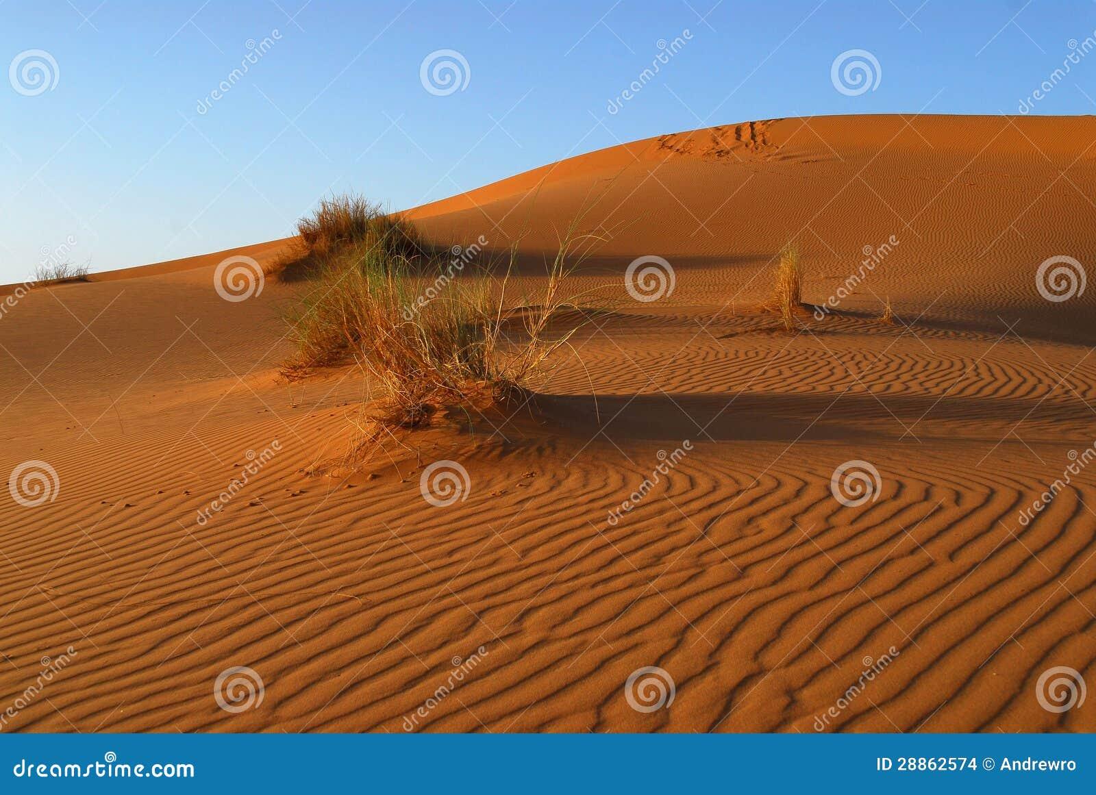 Dunes de désert du Sahara