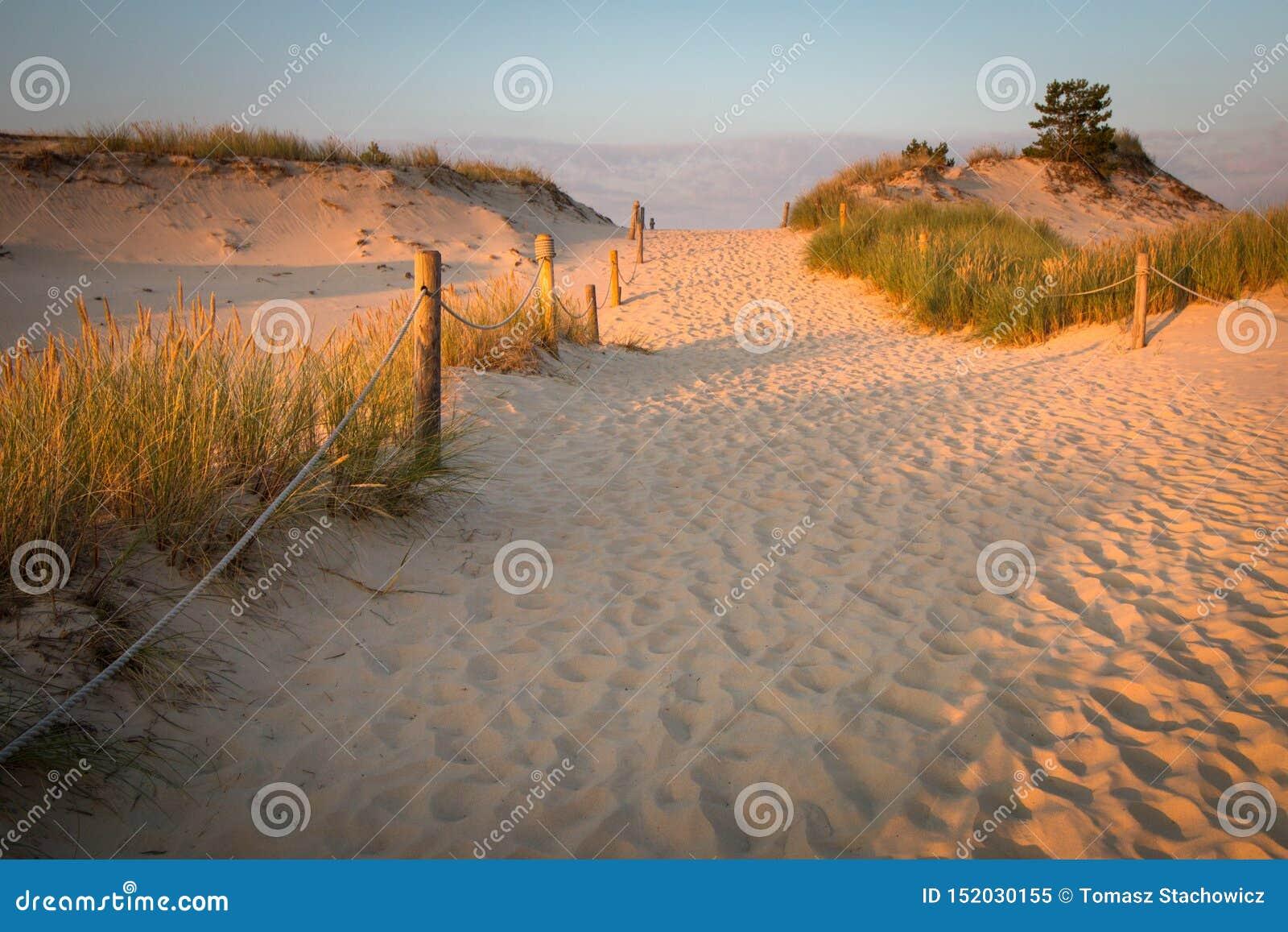 Dunes de la Pologne dans Czolpino