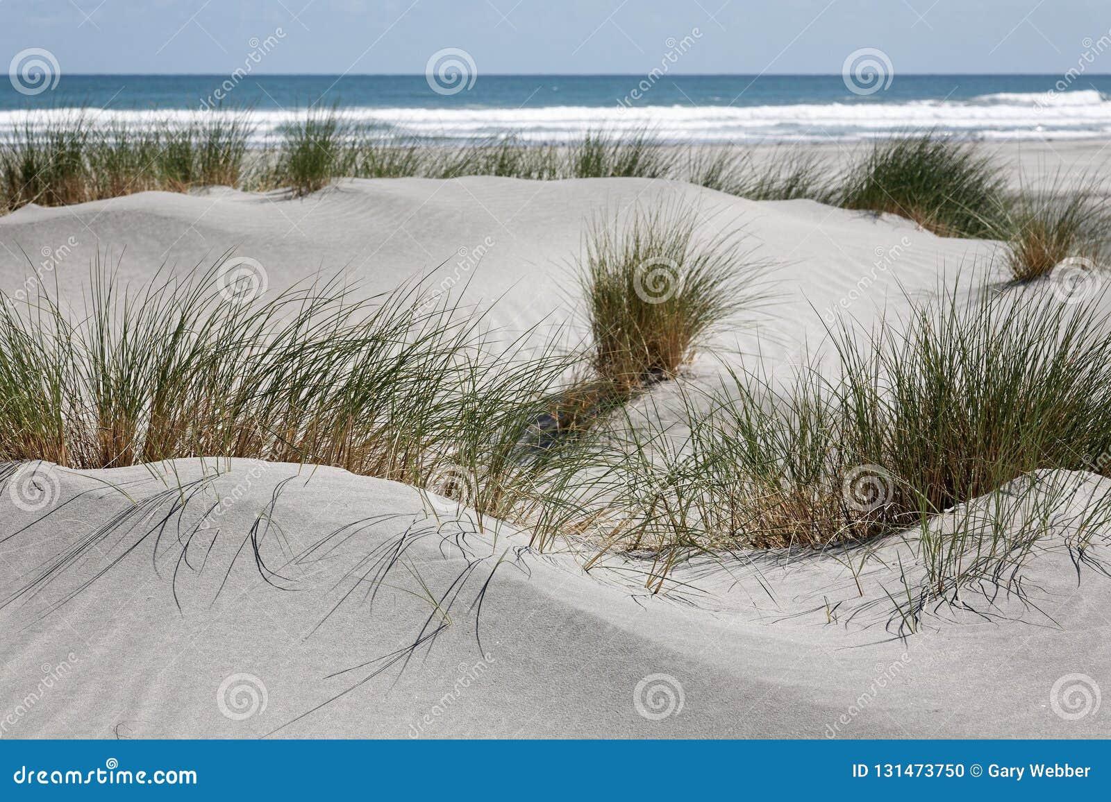 Dunes de sable et roseau des sables blancs, côte ouest, Nouvelle-Zélande