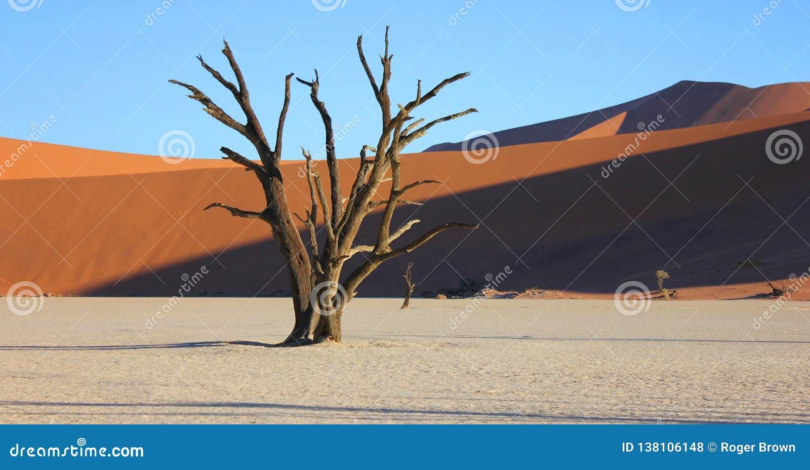 Dunes de sable et un arbre mort chez Deadvlei Namibie