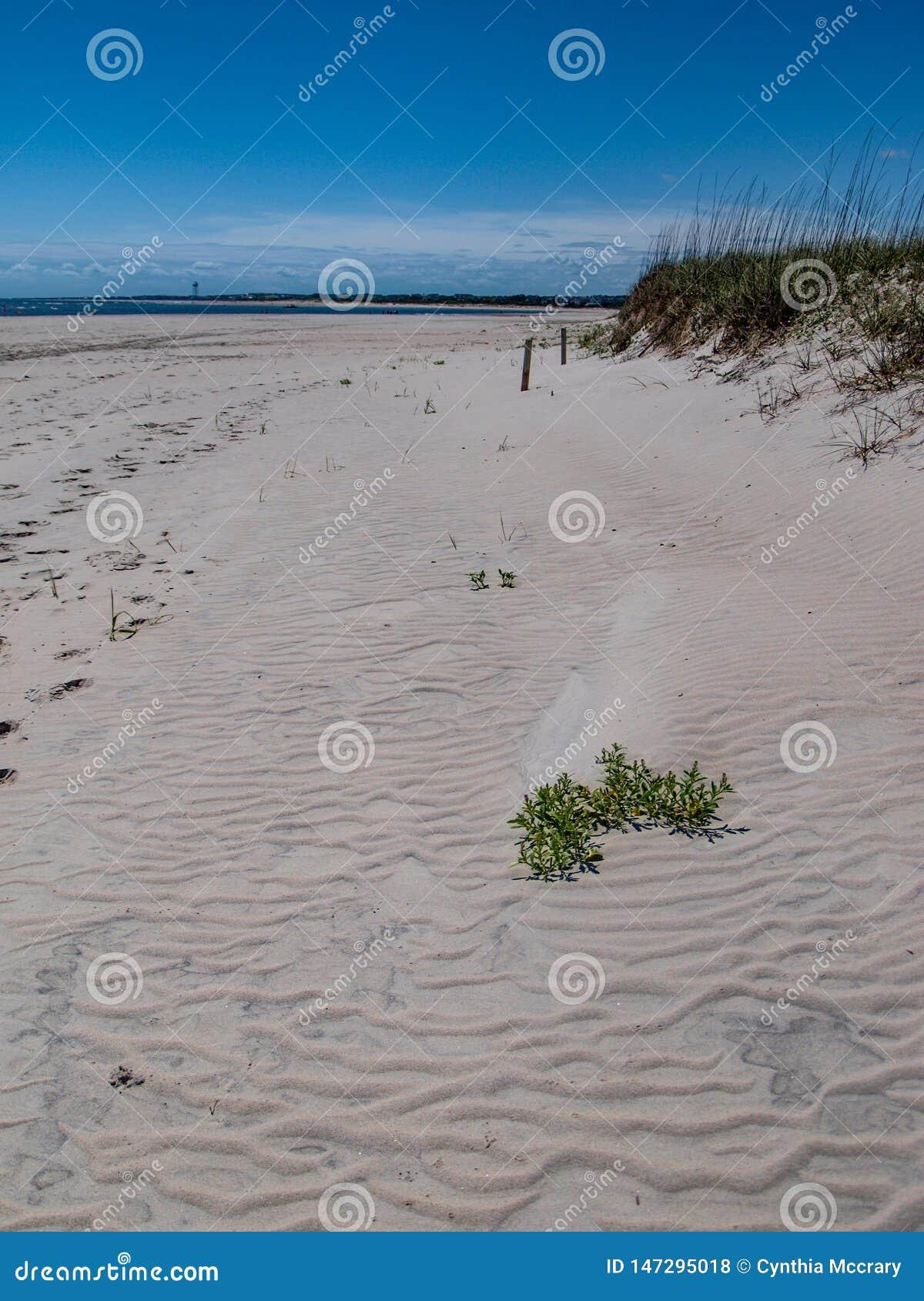 Dunes de sable le long d île de chêne