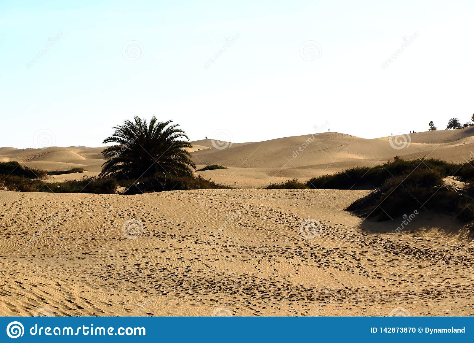 Dunes de Sandy en plage naturelle c?l?bre de Maspalomas Gran Canaria l espagne