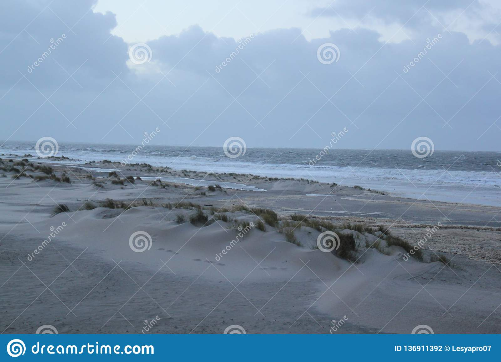 Dunes with grass at the coast of the North Sea in Zeeland in the Netherlands