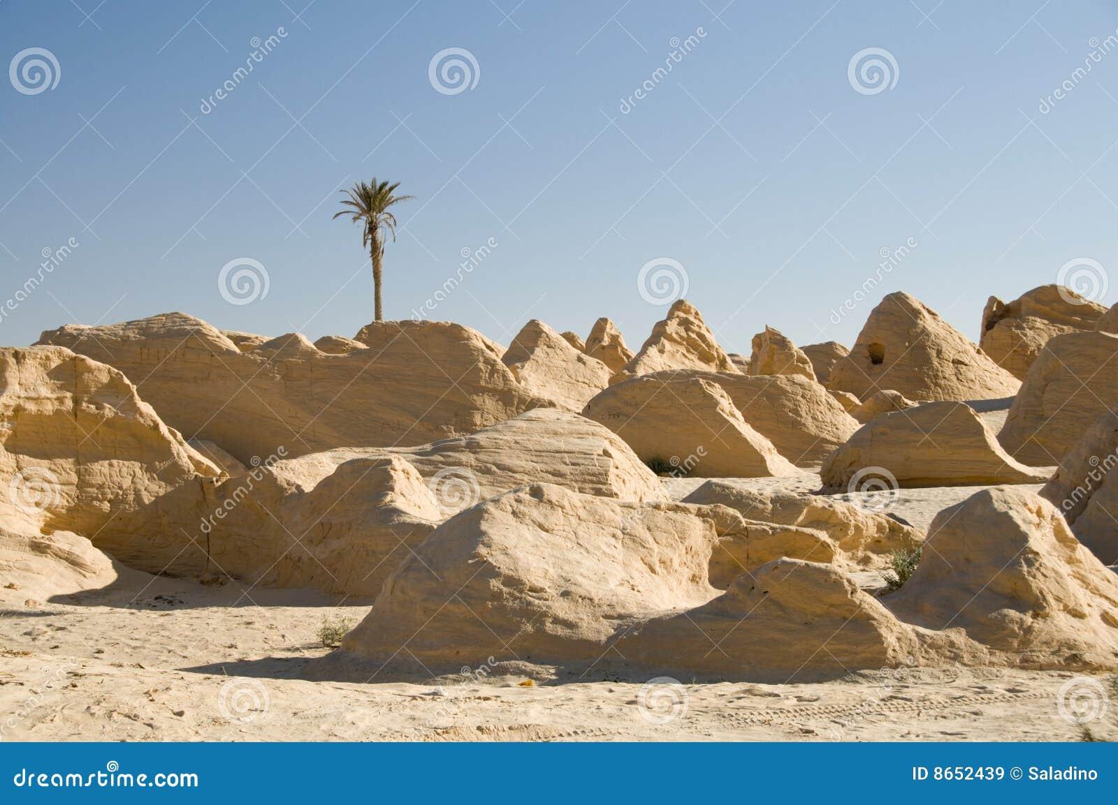 Dunes Petrified