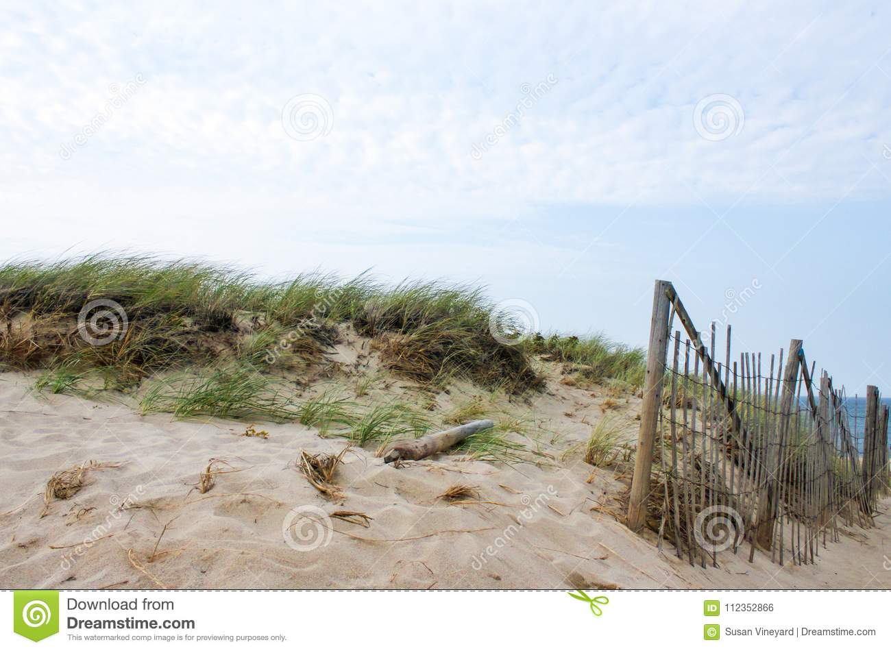 Dunes and sea grass and a bamboo barricade fence to control the drift of the sand on Cape Cod