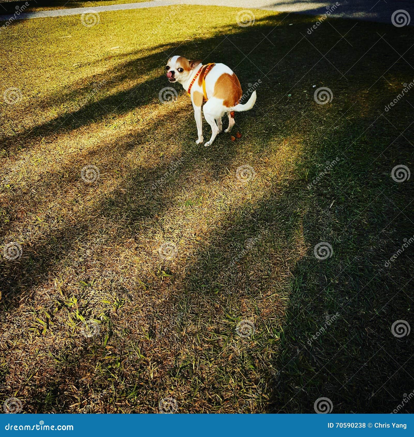 Dunette de chien