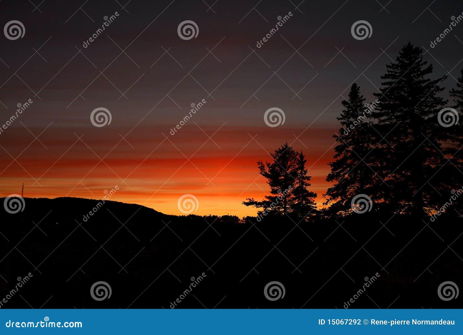 Dunkelroter Sonnenuntergang mit Kieferkegel-Bäume silouhette
