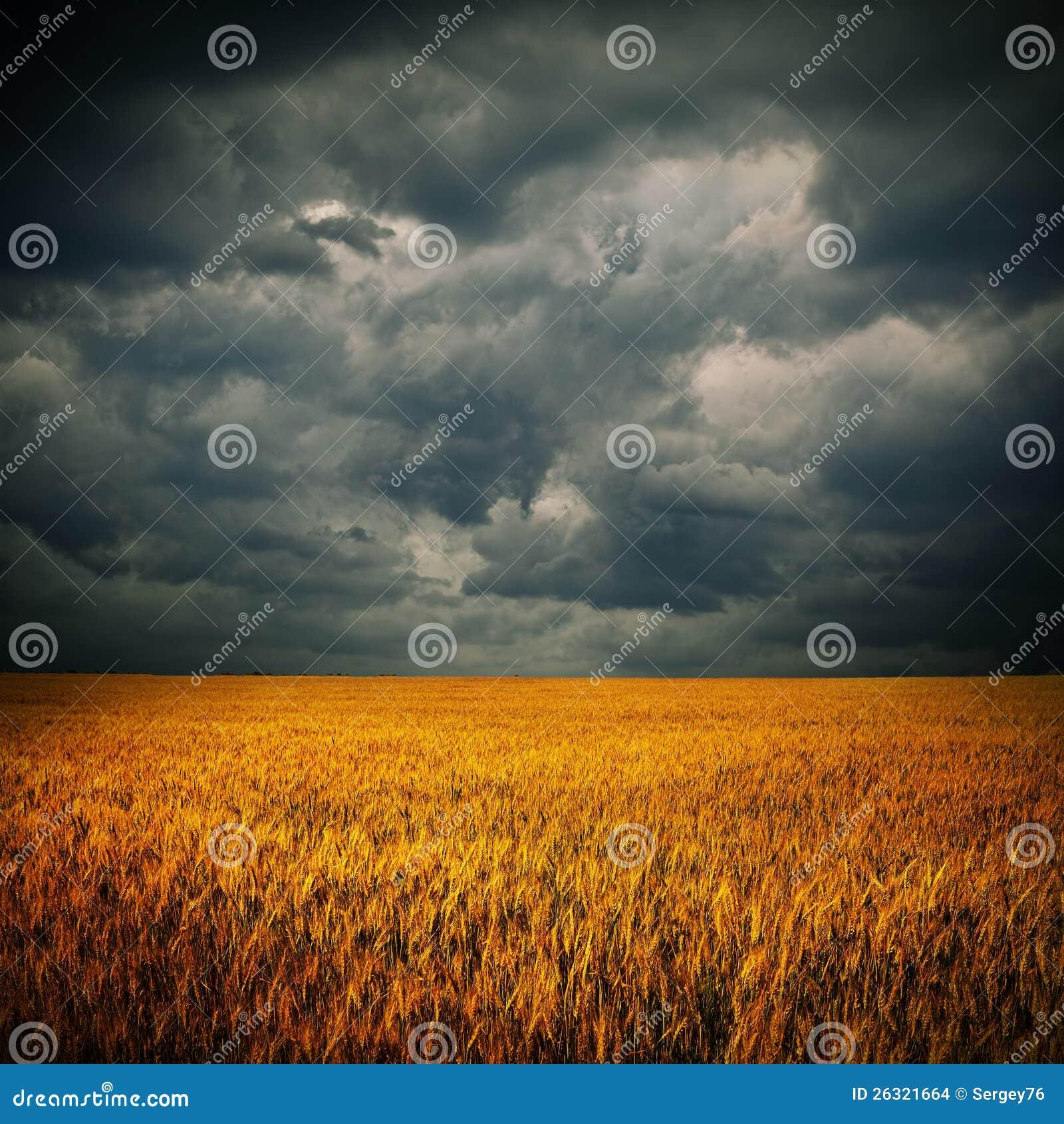 Dunkle Wolken über Weizenfeld