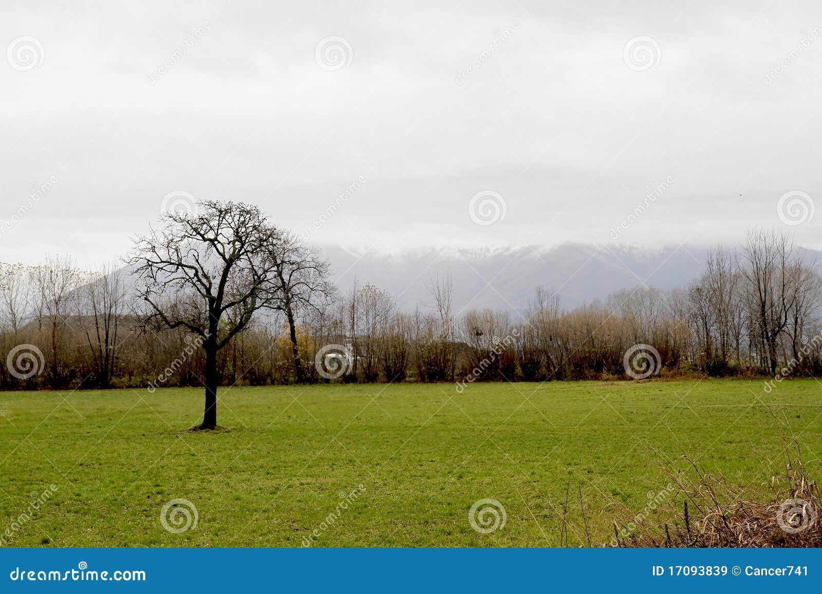 Baum auf dem Landschaftsgebiet