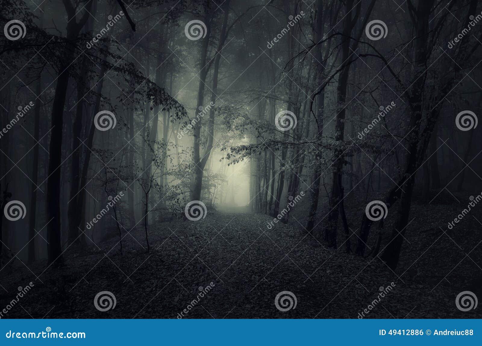 Download Dunkler Weg In Frequentiertem Holz Nachts Stockfoto - Bild von nebel, unheimlich: 49412886