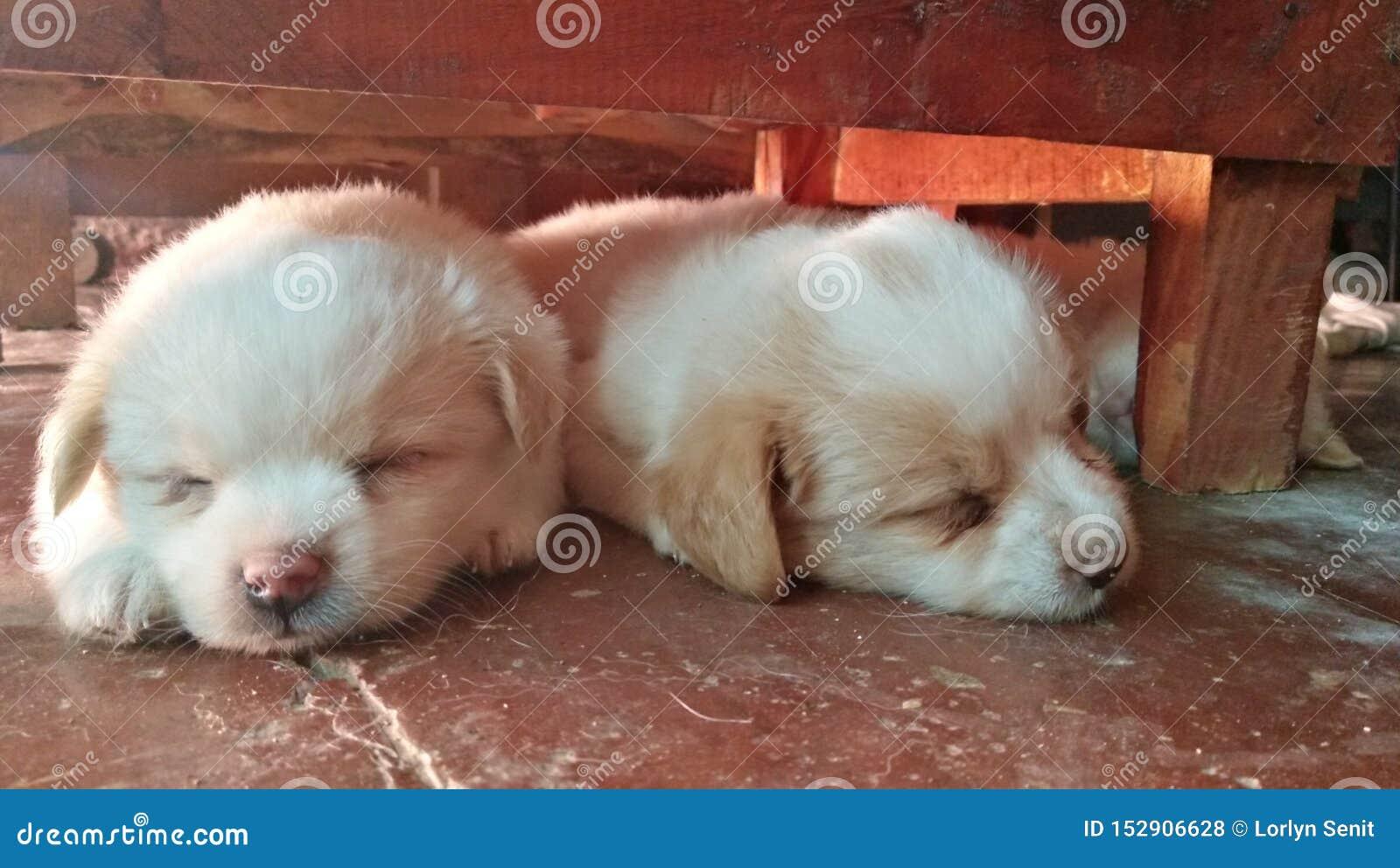 Duo do sono sob a tabela