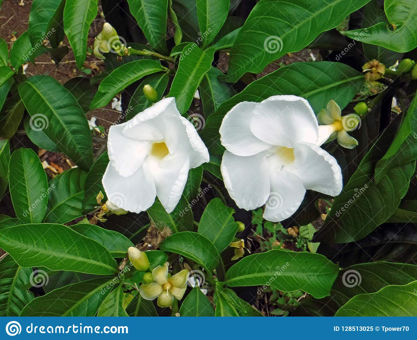 Exotic Hawaii Island Flower Pretty Picturesboss