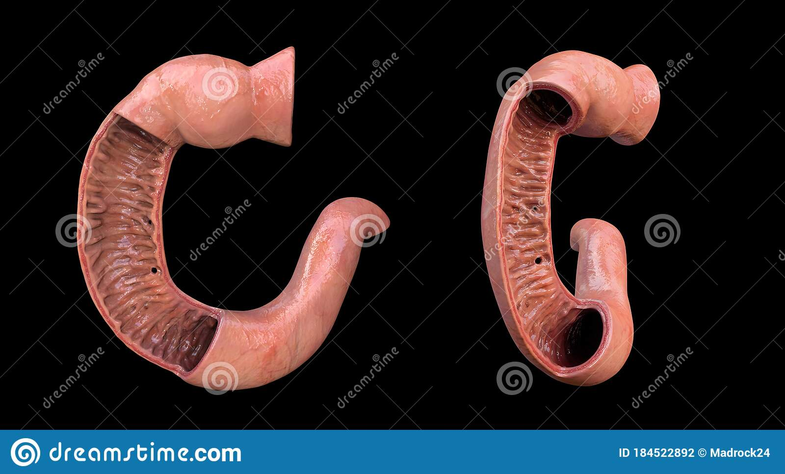 Duodenum, Human Anatomy Set, The First Part Of The Small ...
