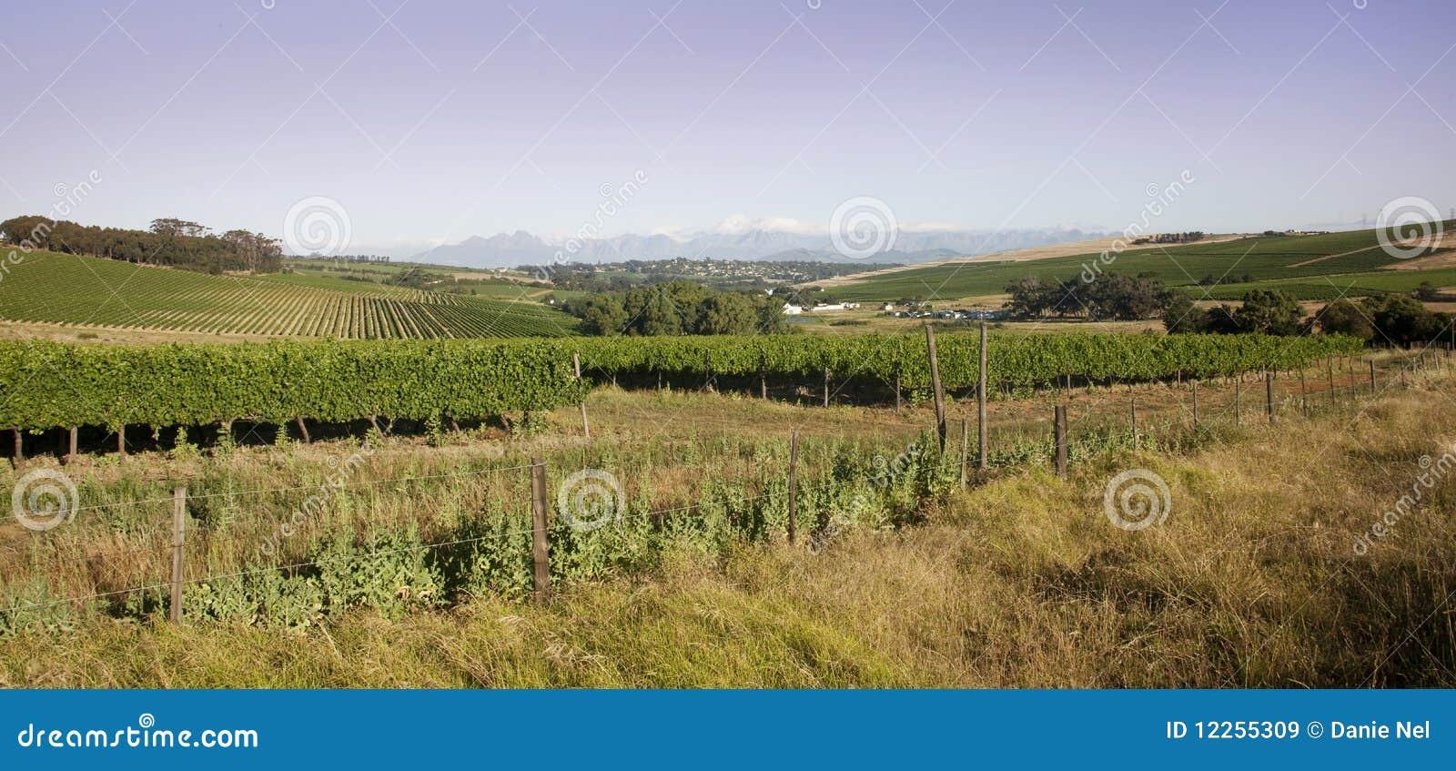 Durbanville Winelands