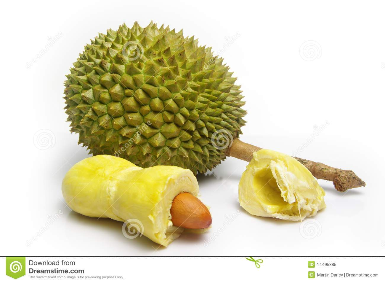 Thorny, pungent Durian fruit (Durio zibethinus). Whole fruit and ...