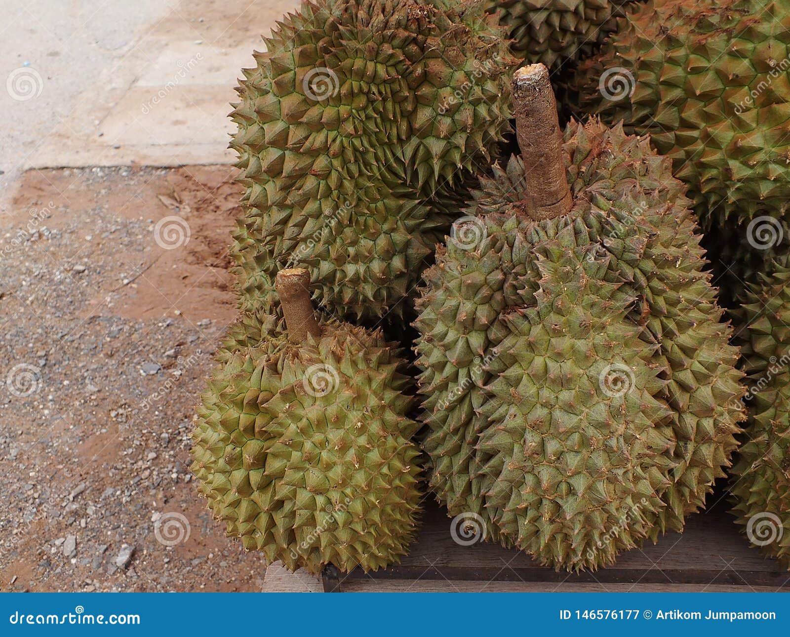 Durian, che ? un in molti numeri da vendere