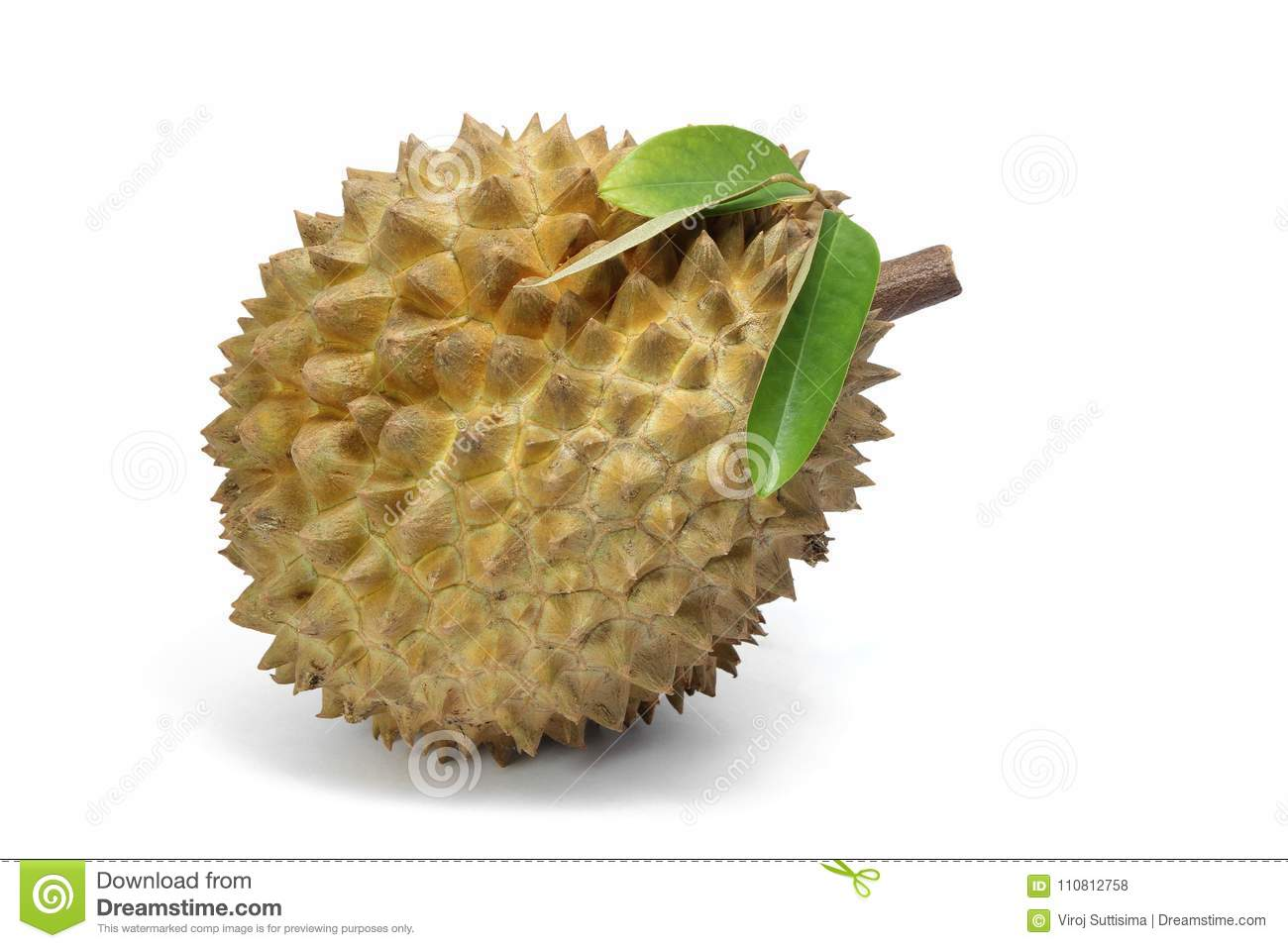 Durian fruits and durian leaf on white background, asia fruits.
