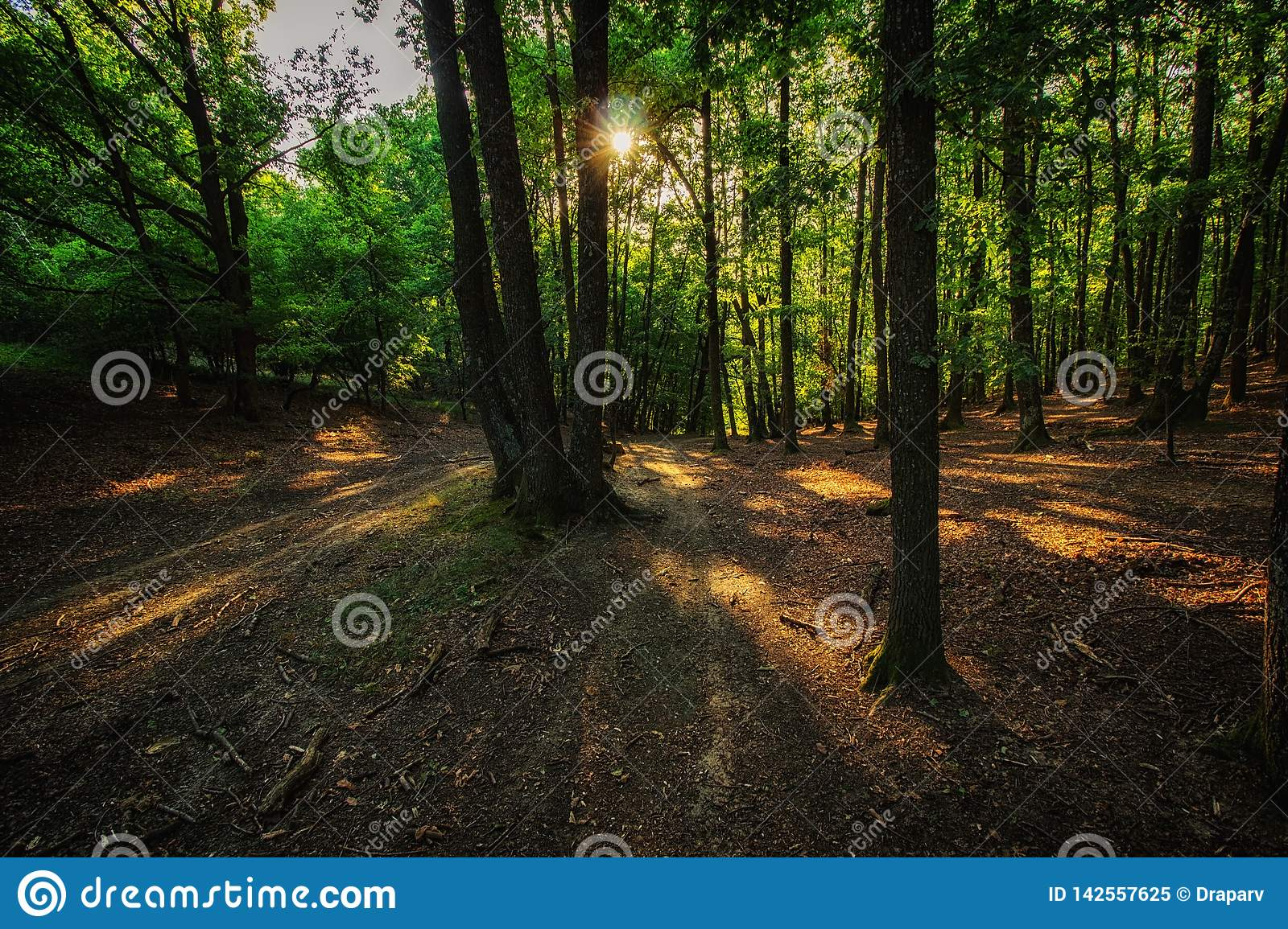 Dusk In The Forest