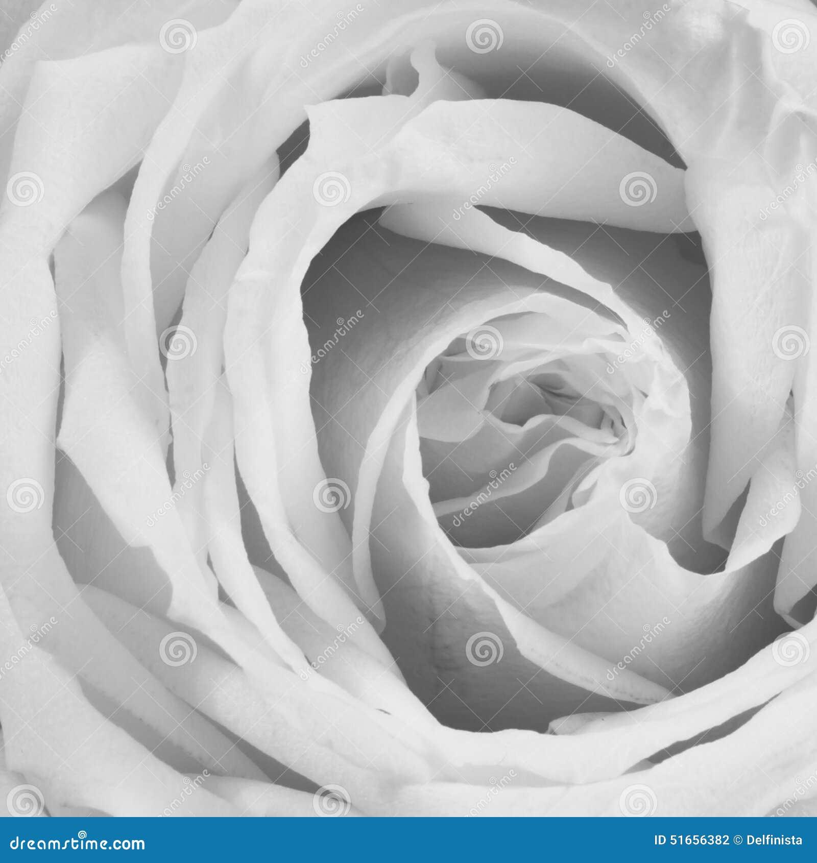 Dusty Rose Background - de Foto s van de Bloemvoorraad