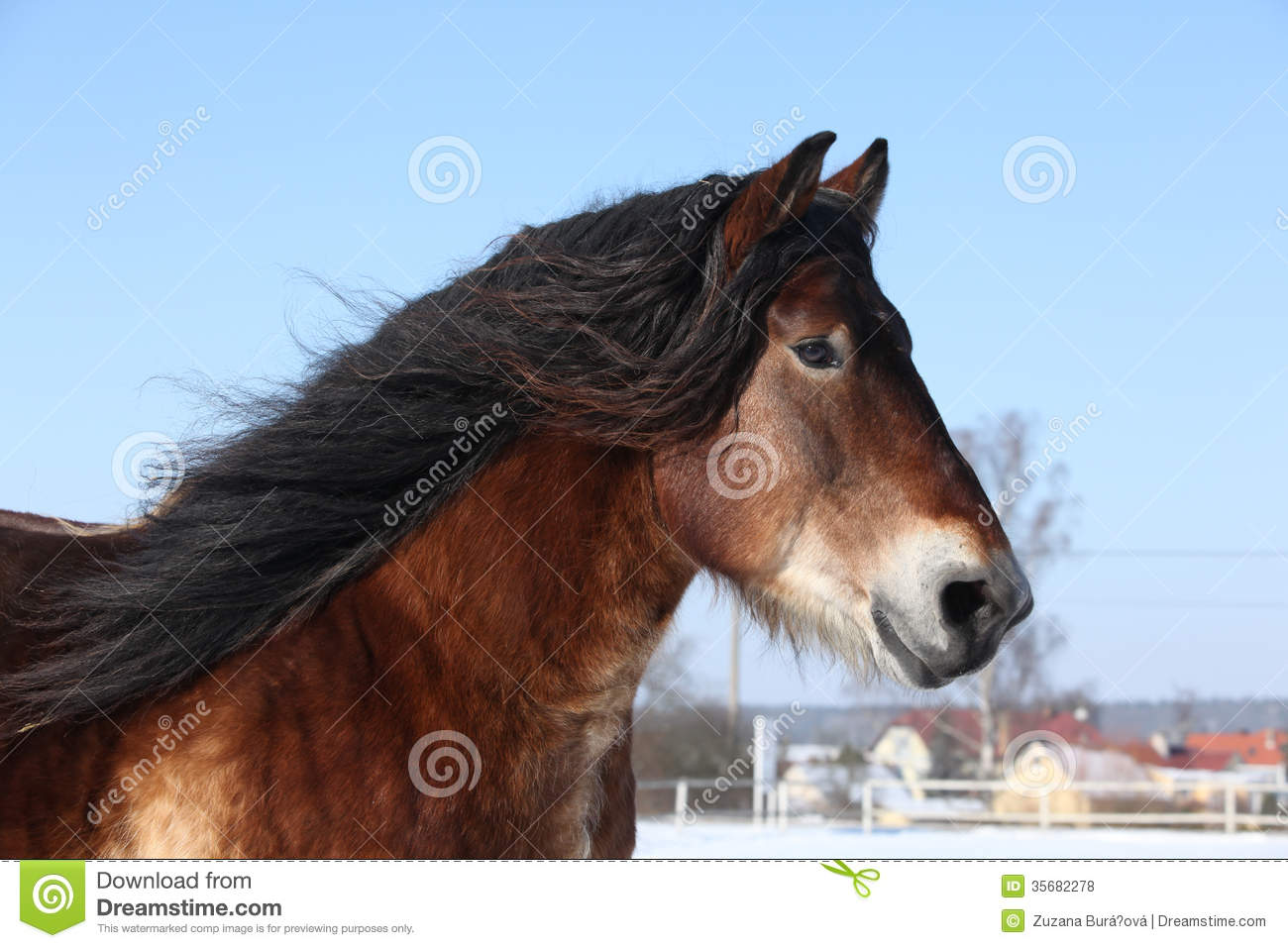 long manes stock photos - photo #26