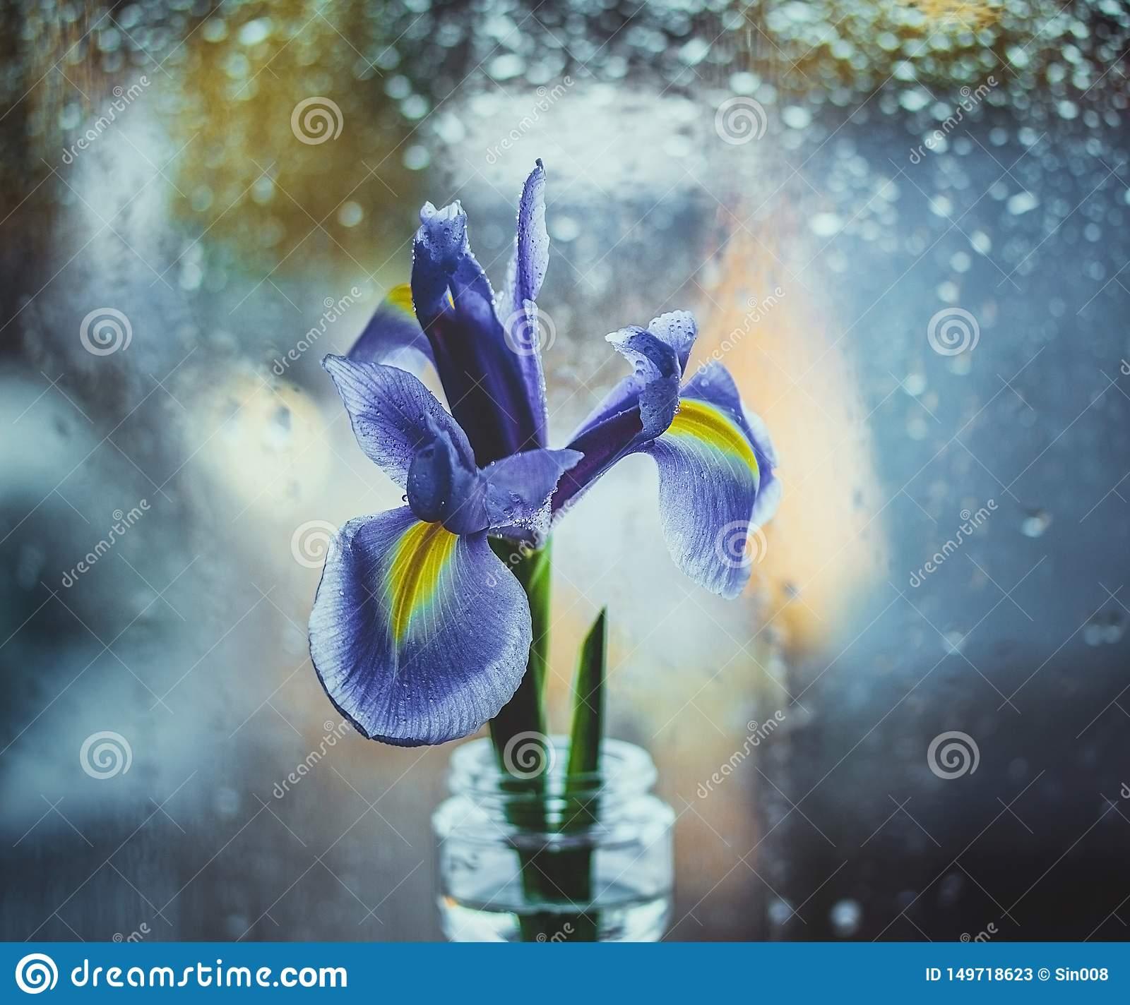 Dutch purple iris in a vase by the window. Bright iris on a blue blurred background with water drops. Bokeh macro, close-up.