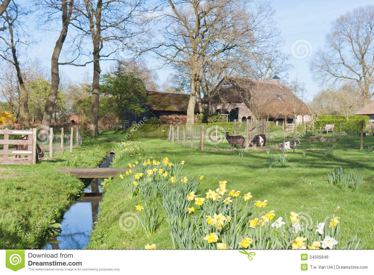 Dutch Rural Scene With Farmhouse And Goats Stock Photo