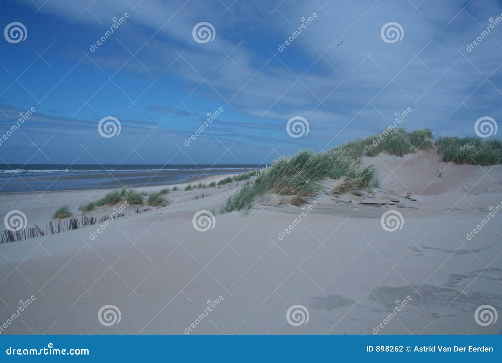 Dutch wydm krajobrazu