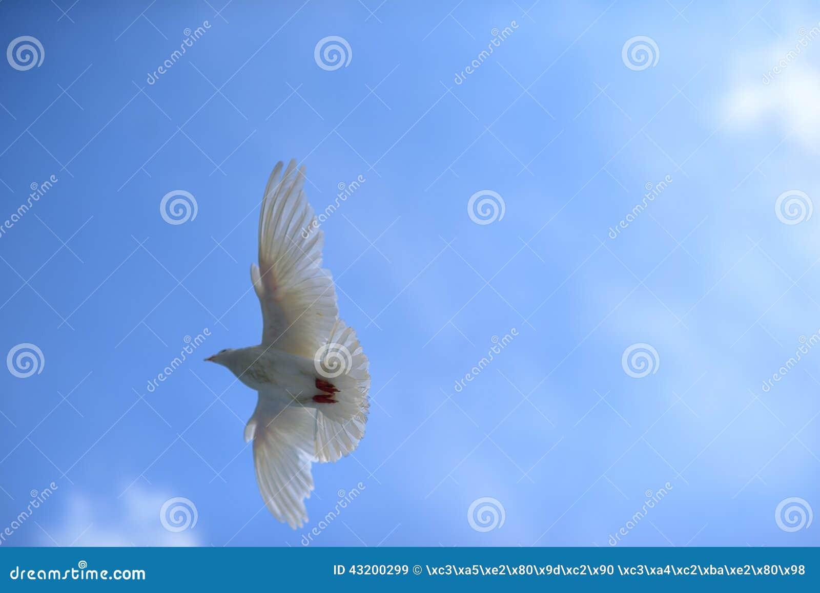 Download Duvor Flyger Fritt Under Den Blåa Himlen Fotografering för Bildbyråer - Bild av vitt, öppet: 43200299