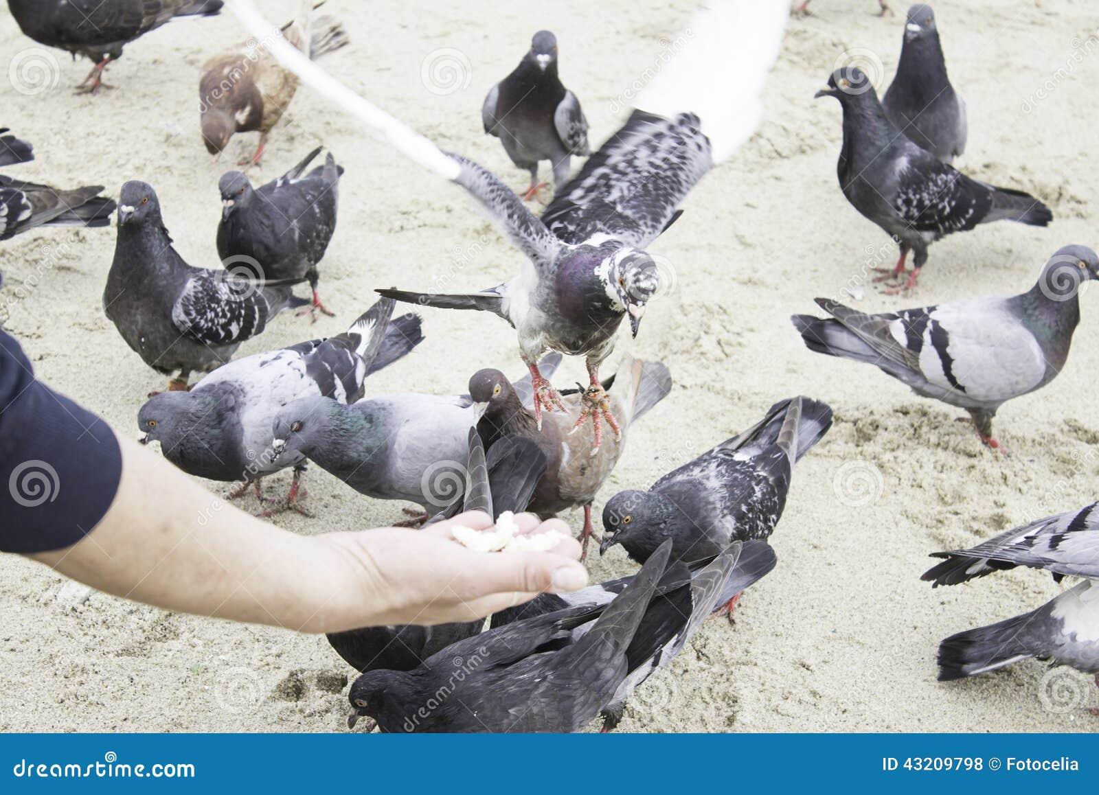 Download Duvor som äter handen arkivfoto. Bild av seed, natur - 43209798
