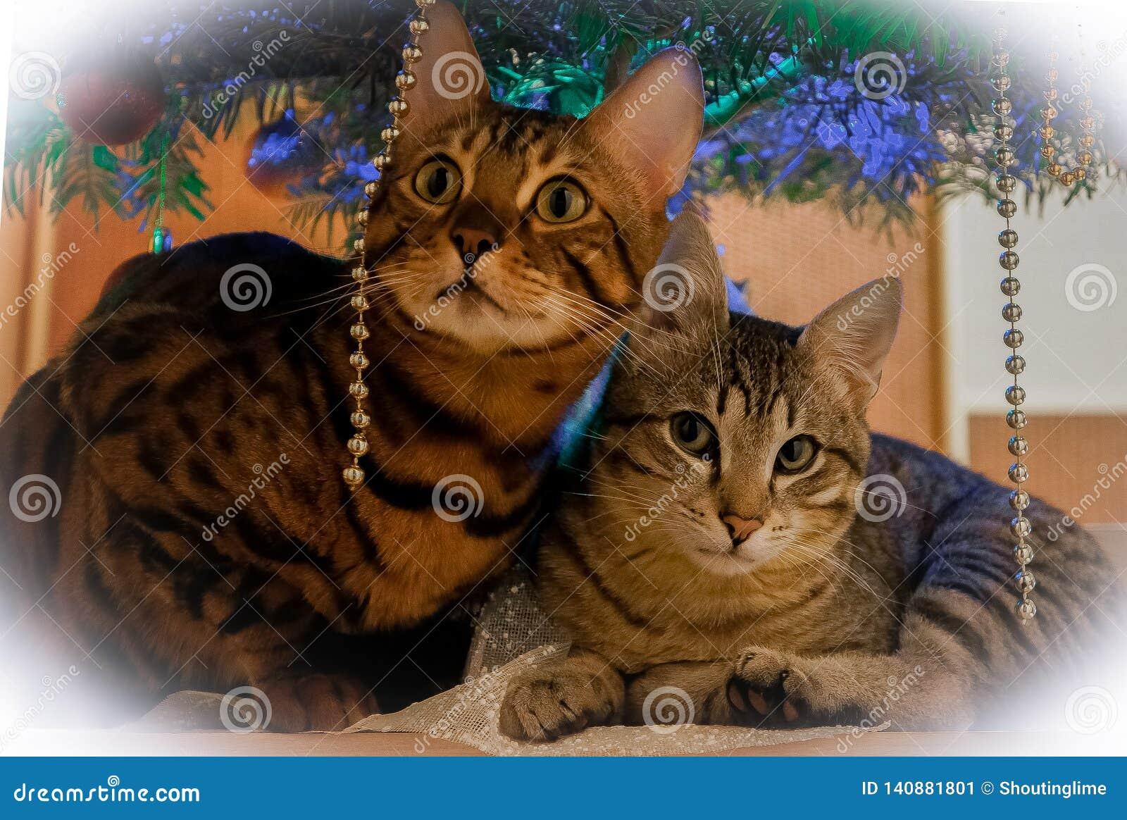 Dwa ślicznego kota pod nowego roku drzewem