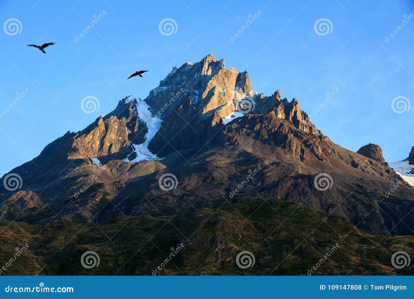 Dwa Caracaras sylwetkowego przeciw niebieskiemu niebu nad skalistą granitową górą, Torres Del Paine park narodowy