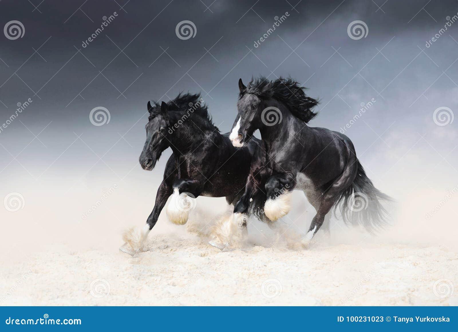 Dwa czarnego konia Shail skała ścigają się wzdłuż piaska przeciw niebu