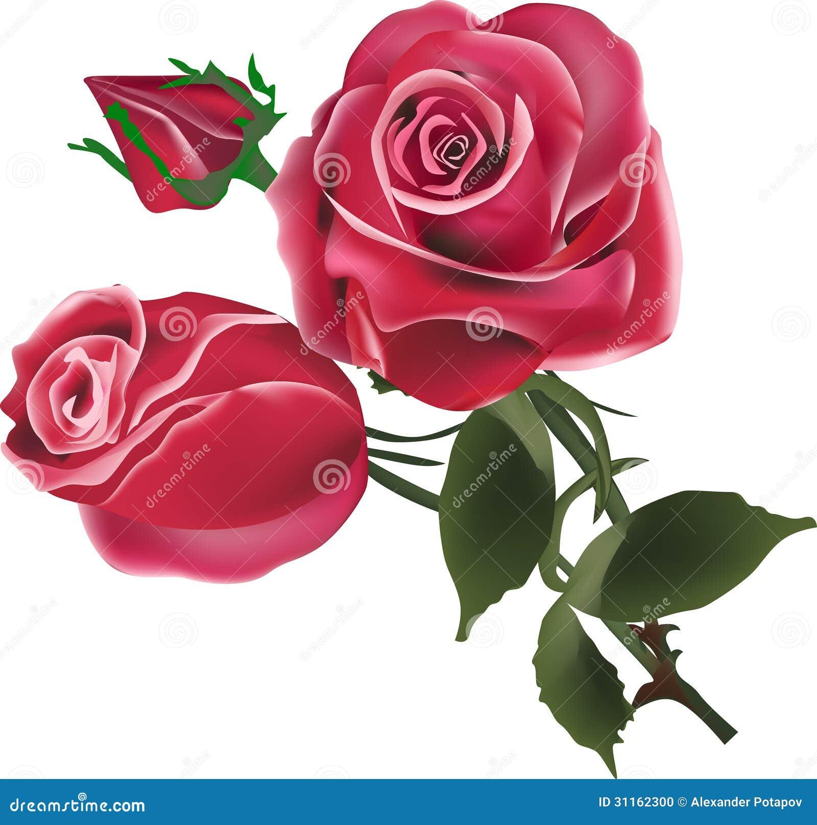 Dwa czerwieni róży pączka na bielu i kwiaty