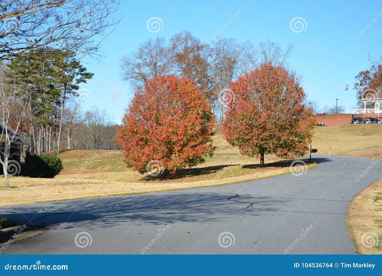 Dwa drzewa na drodze