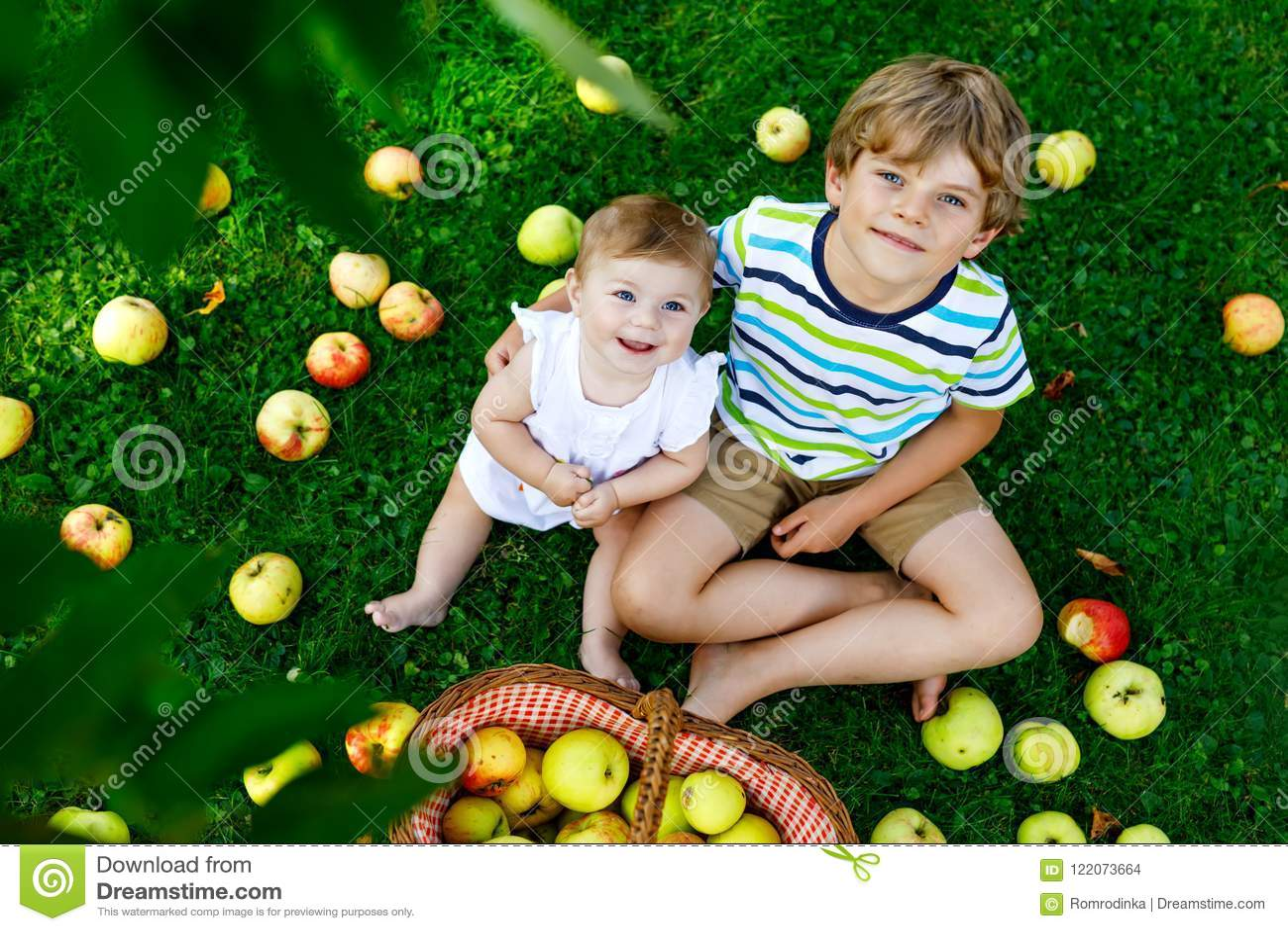 Dwa dziecka podnosi jabłka na gospodarstwie rolnym w wczesnej jesieni Mała dziewczynka i chłopiec bawić się w jabłoń sadzie Dziec